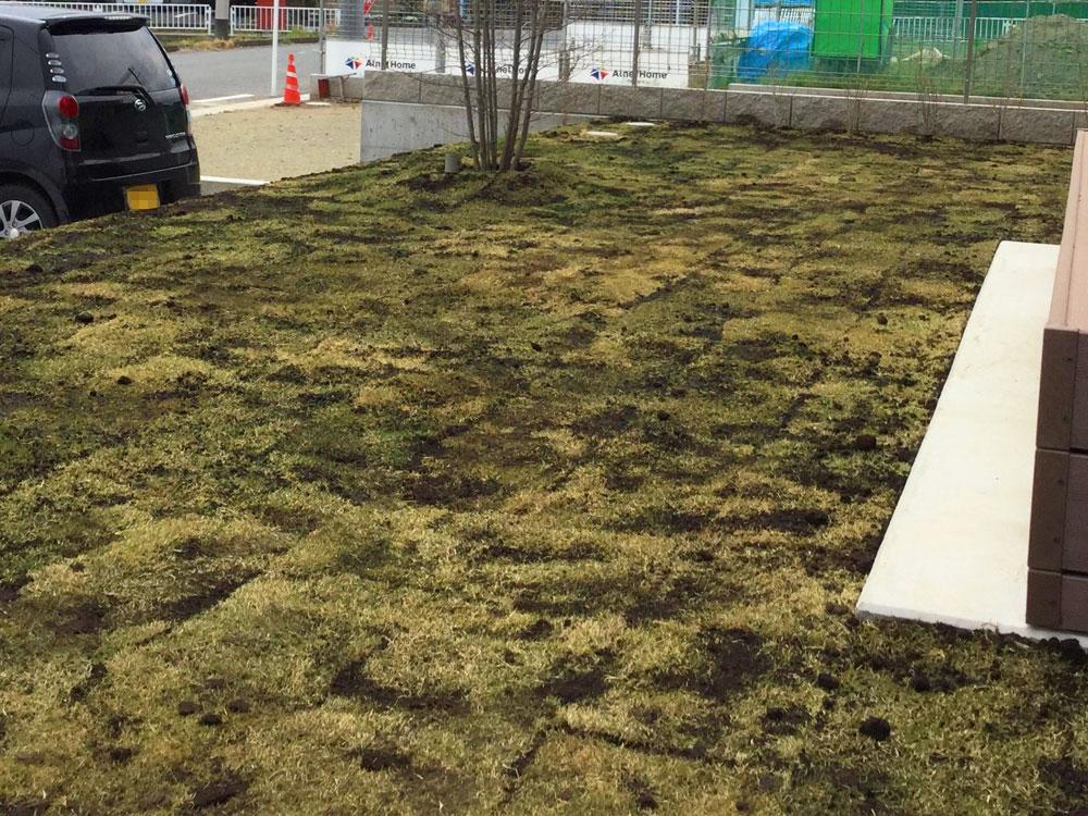 芝張り 目土をかけて完成