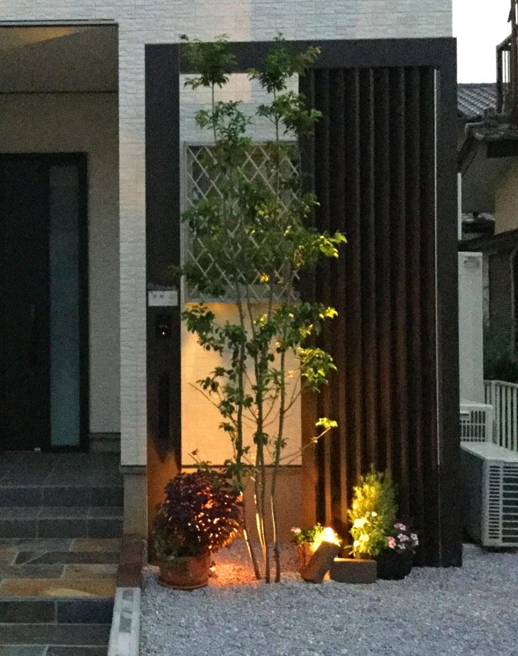 ソヨゴ株立(高さ3.0m)