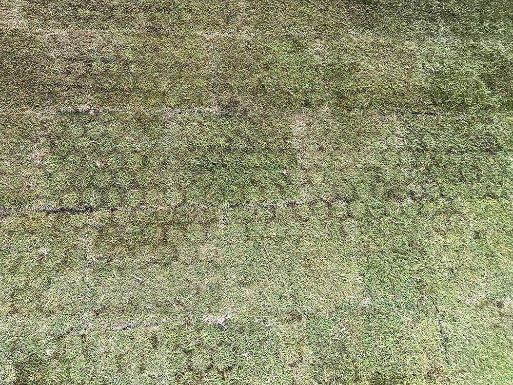 天然芝専用保護材「グラスフィックスエコ」芝生の表面にハニカム模様が浮き出れば完成です。